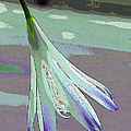 Reclining Lily Abstract by Ben and Raisa Gertsberg