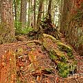 Recycling In The Cheakamus Rainforest by Adam Jewell