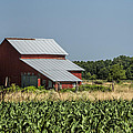 Red Amish Barn And Corn Fields by Kathy Clark