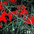 Red An Black Poppies 1 by Nadalyn Larsen