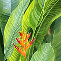 Red And Gold Heliconia by Sharon Freeman