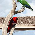 Red And Green Parrots by Jason O Watson