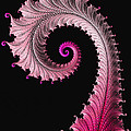Red And Pink Fractal Spiral by Matthias Hauser