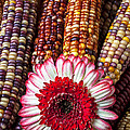 Red And White Mum With Indian Corn by Garry Gay