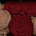Red And White Roses Color Engraved by David Dehner