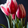 Red And White Tulips by Jeff Folger