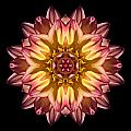 Red And Yellow Dahlia Iv Flower Mandala by David J Bookbinder