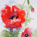 Red Anemones by Marna Edwards Flavell