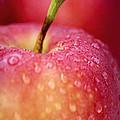 Red apple macro by Elena Elisseeva