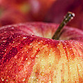 Red Apple by Paulo Goncalves
