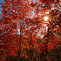 Red Autumn Leaves by Jerry Cowart