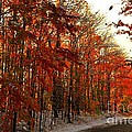 Red Autumn Road In Snow by Terri Gostola