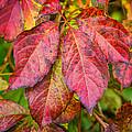Red Autumn by Steve Harrington