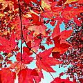 Red Autumn by Tisha Clinkenbeard