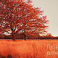 Red Autumn by Violet Gray