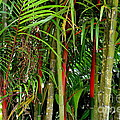 Red Bamboo by Mary Deal