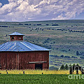 Red Barn And Barbed Wire by Priscilla Burgers