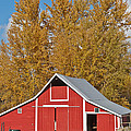 Red Barn And Fall Colors by Jeff Goulden