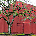 Red Barn And Green Tree In Dundee Hills Oregon Wine Country by Elizabeth Rose