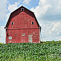 Red Barn And New Corn by David Arment