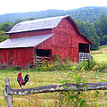 Red Barn And Rooster by Duane McCullough