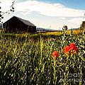 Red Barn by Meghan at FireBonnet Art