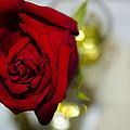 Red Beauty II by Sotiris Filippou