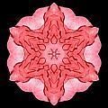 Red Begonia II Flower Mandala by David J Bookbinder