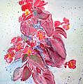 Red Begonias by Linda Feinberg