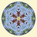Red Bellied Turtle Mandala by Beth Sawickie