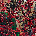 Red Berries by Dotti Hannum