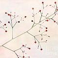Red Berries by Sabrina L Ryan
