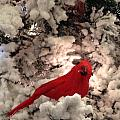 Red Bird In A Snow Covered Tree by Hope VanCleaf