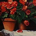 Red Bloom In Terracotta by Paul Tremlin