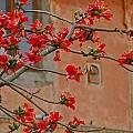 Red Blossoms In The Pink City by Louise Morgan