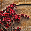 Red Bougainvilla Vine On Stucco Wall by Clare VanderVeen