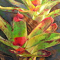 Red Bromeliad by Sandra Williams