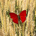 Red Butterfly In The Tall Weeds by Garry Gay