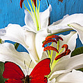 Red Butterfly On White Tiger Lily by Garry Gay