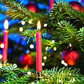 Red Candles In Christmas Tree by U Schade