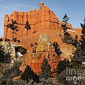 Red Canyon - Scenic Byway 12 by Sheryl Young