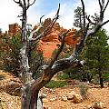 Red Canyon Tree And Rocks by Debra Thompson