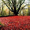Red Carpet by John Murphy