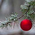 Red Christmas Ball Branch by Terry DeLuco