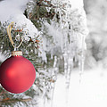 Red Christmas Ornament On Icy Tree by Elena Elisseeva