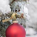 Red Christmas Ornament On Snowy Tree by Elena Elisseeva