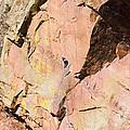 Red Cliff by Steve Krull