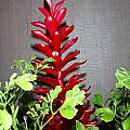 Red Cone Ginger - No 1 by Mary Deal