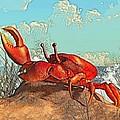 Red Crab by Daniel Eskridge