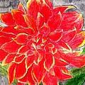 Red Dalia  by Margie  Byrne